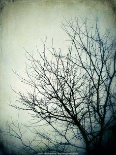 April 15, 2013 'Indistinct'  by Scott Francis / SomethingCurious.com
