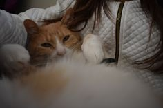Fotos Tumblr gatos