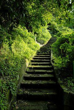 escada em meio ao verde