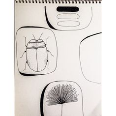 Monday night sketch. Space mushrooms, beetle, flower and... time for bed. #tiredmomma #penandink #cairns #beetle #insect #botanical #instaart #artofinstagram