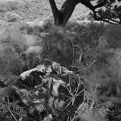 Tree Line Rob Hudson