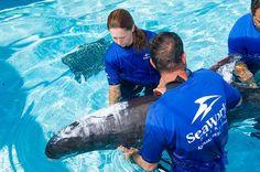 Orlando, FL (02 de agosto de 2016) - Na semana passada a equipe de resgate do SeaWorld Orlando recebeu em seu…