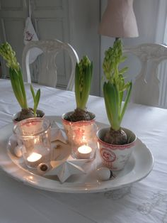 After looking at Swedish Christmas decorations, I am convinced I need to force some bulbs. Love these ones in the tea cups!!!