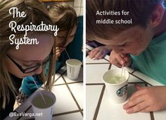 The Respiratory System: Activities for Middle School @EvaVarga.net