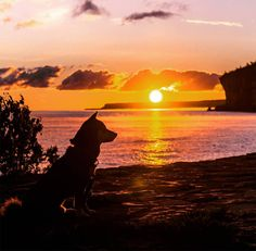 If you have a picture of your dog on an epic outdoor adventure please post in the comments below. Funny Dog Images, Funny Dogs, Outside Dogs, Outdoor Dog, Dog Mom, The Great Outdoors, Best Dogs, Dogs And Puppies, Beautiful Places