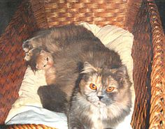 Mama mit Babys