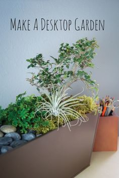 DIY Desktop Garden --> http://www.hgtvgardens.com/decorating/make-a-desk-garden-oasis?soc=pinterest