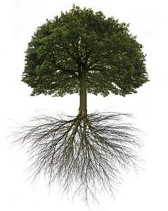 """Mustard Tree is it so wonder Jesus chose this tree as likening to Heaven. There are an abundance of """"tree branch"""" roots in it's design"""