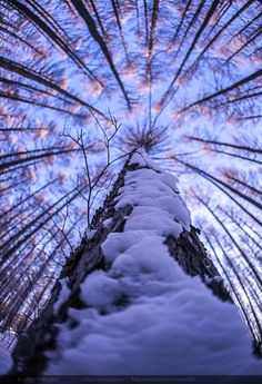 up to sky by Simon Sun on 500px
