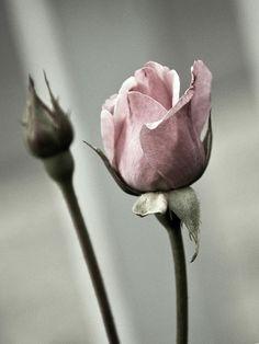 gorgeous gray and pink  .. X ღɱɧღ ||