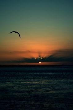 Valter da Rosa Borges  O sol de fim de tarde pouco aquece Em tudo sopra uma saudade fria  Recolho os sonhos e recolho os fatos Todos serão iguais no anoitecer.