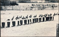 100 BOOTS Move On by Eleanor Antin 1971 – 1973, Los Angeles, CA/
