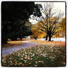 I like the colours of autumn