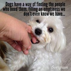 ...and humans have a way of finding dogs who need them, but completely ignore or mistreat them. :( Dogs tied outside 24/7, in all kinds of weather, neglected, deserve better.