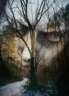 """""""You couldn't relive your life, skipping the awful parts, without losing what made it worthwhile. You had to accept it as a whole--like the world, or the person you loved."""" — Stewart O'Nan From The Odds: A Love Story(la charca by Antonio Mora)"""