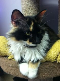 Fluffy Hazel is one of 75 cats who live at Sayreville Pet Adoption Center