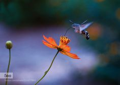 small worlds by mutmain. Please Like http://fb.me/go4photos and Follow @go4fotos Thank You. :-)