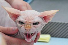 This cat would scare the poop out of me! And I love cats.....yikes!!