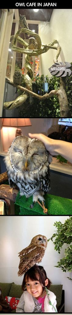 "Owl Cafe.  i love the thought of petting an owl, but cannot support these poor babies with ""leashes"" on their legs."