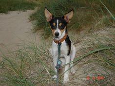 Basse Terrier | Pawshake