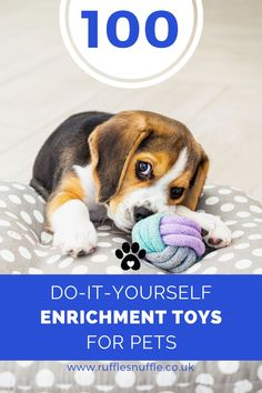 From rats and rabbits, to snakes and parrrots we've got toys to keep you busy all year round. Even though some of these toys may specify cat or dog, they can be interchangeable. Your cats may love playing with dog toys and vice versa. So get your scraps and scissors at the ready and dive in! Diy Puppy Toys, Puppy Chew Toys, Toy Puppies, Dogs And Puppies, Dog Care Tips, Pet Care, Dog Enrichment, Animal Society, Dog Activities