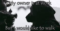 Cooljonny.com offers dog walking, pet sitting and many other pet services.