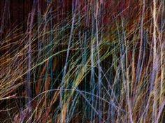 Colored stalks