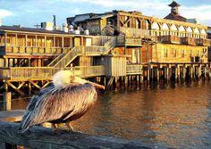 1000 images about travel florida cedar key on for Cedar key fl fishing