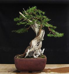 ♀️Bonsai More Pins Like This At FOSTERGINGER @ Pinterest ♀️