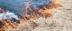 CRANDALL, Texas — The North Texas Municipal Water District (NTMWD) is planning a prescribed burn of thatch at portions of the East Fork Raw Water Supp...