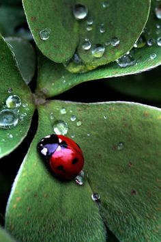 Lady Bugs :-) The only bug I <3 they bring good luck to those who find them :-)
