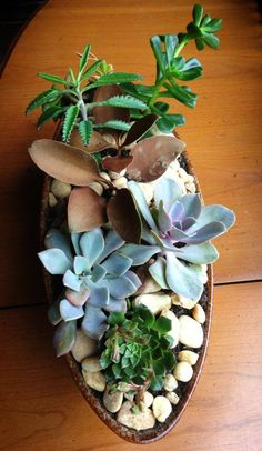 A beautiful centerpiece created for about $25 dollars! via @Southeast Succulents