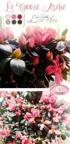 Gioiosa Azalea in che mani sei finita! - Color palette of March 31, 2016 http://graficscribbles.blogspot.it/2016/03/gioiosa-azalea-rhododendron-rododendro.html #azalea #rododentdro