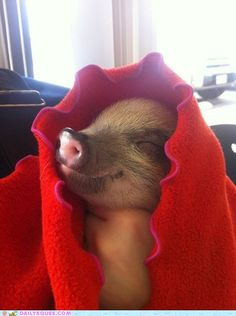 my kind of pig in a blanket!