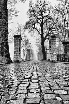 mysterious cobblestone path.