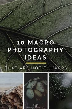 10 Best Macro Photography Ideas for Beginner Photographers. Bored of flower macr… 10 Best Macro Photography Ideas for Beginner Photographers. Bored of flower macro photography? Try these original and creative ideas. Macro Photography Tips, Photography Challenge, Photography Tips For Beginners, Photography Lessons, Photography Projects, Photography Business, Photography Tutorials, Creative Photography, Digital Photography