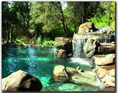 natural looking pool | the most completely natural looking traditional concrete swimming pool ...