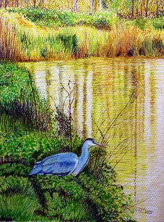 On The Menu Pastel, watercolour and mixed media, 210 X on Winsor & Newton Lana pastel paper. This work of art is sold unframed. A Heron is stalking his pray from the banks of a canal in the heart of the industrial West Midlands. Pastel Paper, Watercolor Paintings, Watercolour, West Midlands, Heron, Art For Sale, Bird, Drawings, Banks