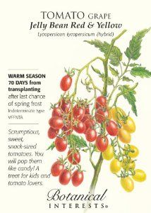 """Grape Tomato """"Jelly Bean Red and Yellow"""" Seeds by Botanical Interests. $2.99. Lycopersicon lycopersicum. Disease and crack resistant variety. 70 milligram seed package. Easy to grow. Heavy bearing variety. The Jelly Bean Cherry Tomato comes in two colors, red and yellow. The seeds are coded, so you can be sure to enjoy each color in your garden. These bite sized tomatoes have a great flavor, and are easy to grow! Jelly Bean is resistant to disease and cracking. The seed comes..."""