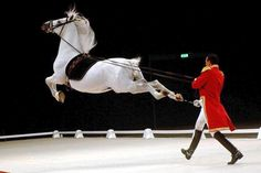 The Lipizzan is a breed of compact, muscular Baroque-type horses that has become popular through its demonstrations of stylized jumps, classical dressage Pretty Horses, Beautiful Horses, Majestic Horse, Lippizaner, Spanish Riding School, Funny Animals, Cute Animals, Types Of Horses, Baby Horses