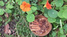 SII COLOPATHIE Candidas albicans.Des traitements naturels qui soulagent mieux que les médicaments et soignent durablement.