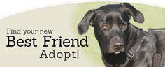 shelter animals images   Adopt - Lakeland Animal Shelter