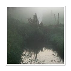 Misty 1 in de Image Gallery [fotoapparatuur.nl]