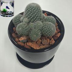 Our Pet Cactus