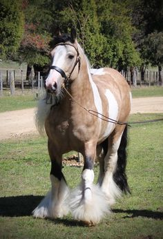 1000 images about horses   draft horses on pinterest