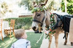 Wedding Burro, Wedding Donkey