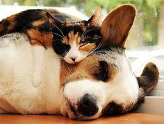 Quer Ser Meu Travesseiro?