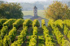 Vous déniche des expériences authentiques de qualité en Dordogne - Junto sur Everything.fr Dordogne, Vineyard, Outdoor, Outdoors, Vine Yard, Vineyard Vines, Outdoor Games, The Great Outdoors
