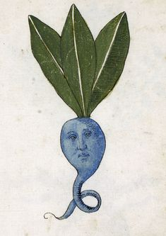 discardingimages: blue root herbal Italy century Philadelphia University of Pennsylvania Rare Book & Manuscript Library ( LJS 419 fol. Medieval Drawings, Medieval Paintings, Medieval Art, Art And Illustration, Botanical Illustration, Illustrations, Medieval Manuscript, Illuminated Manuscript, Inspiration Art