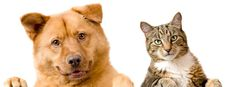 Cats and Dogs Love - https://cards.twitter.com/cards/18ce53uybjf/1a272